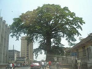 Cotton_Tree_(Sierra_Leone)