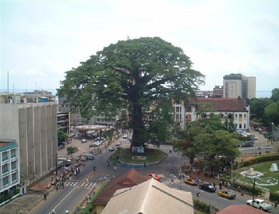 Sierra_Leone-Cotton_Tree