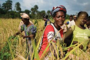 women farmers - investing-african-agriculture
