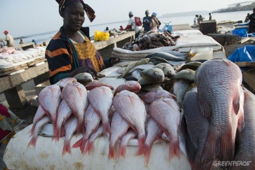 Woman at Soumbedioune fish market. Greenpeace is campaigning in West Africa for the establishment of a sustainable, low impact fisheries policy that takes into account the needs and interests of small-scale fishermen and the local communities that depend on healthy oceans.