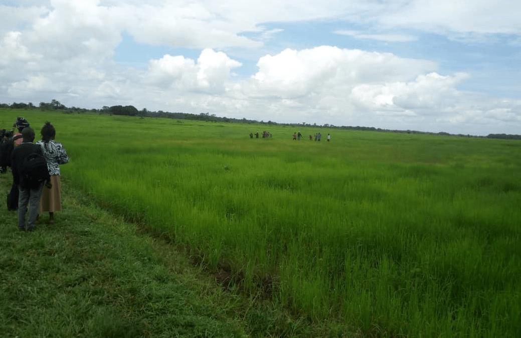 madam isatu sesay farms in kambia1