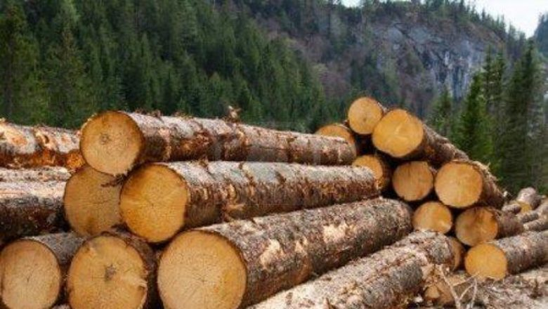 timber 4
