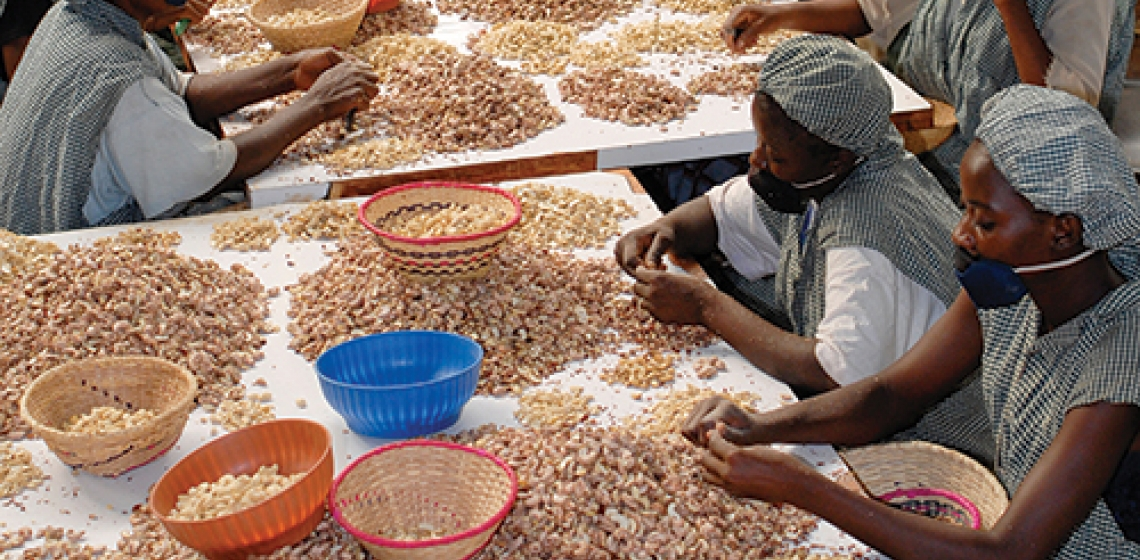 Image result for Senegal: US Launches $38 Million Cashew Value Chain Project for Gambia, Senegal, Bissau