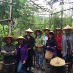 Group DongShan Plantation