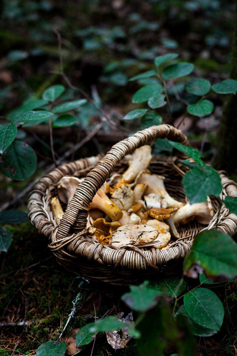 The Simple Green - Chanterelles