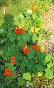 garden.7.11.09 007