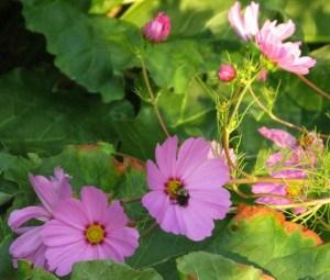 garden.7.11.09 009