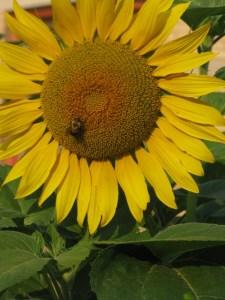 garden.7.11.09 010