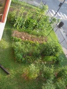garden.7.11.09 019