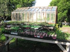 Seedlings in the Edible Schoolyard