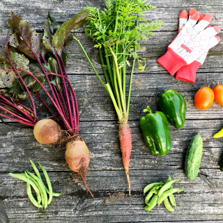 Why YOU Should Start A Vegetable Garden