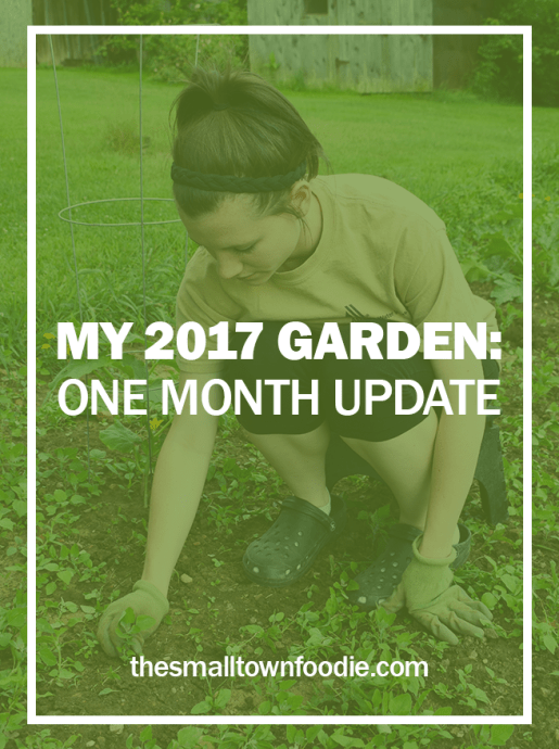 It's hard to believe it's already been a month since we planted our garden. We've been weeding, added cages and rods, dealt with some pests, and have little veggies growing! All the work planting the garden is finished, but we still have some things to keep up with as it continues to grow | The Small Town Foodie