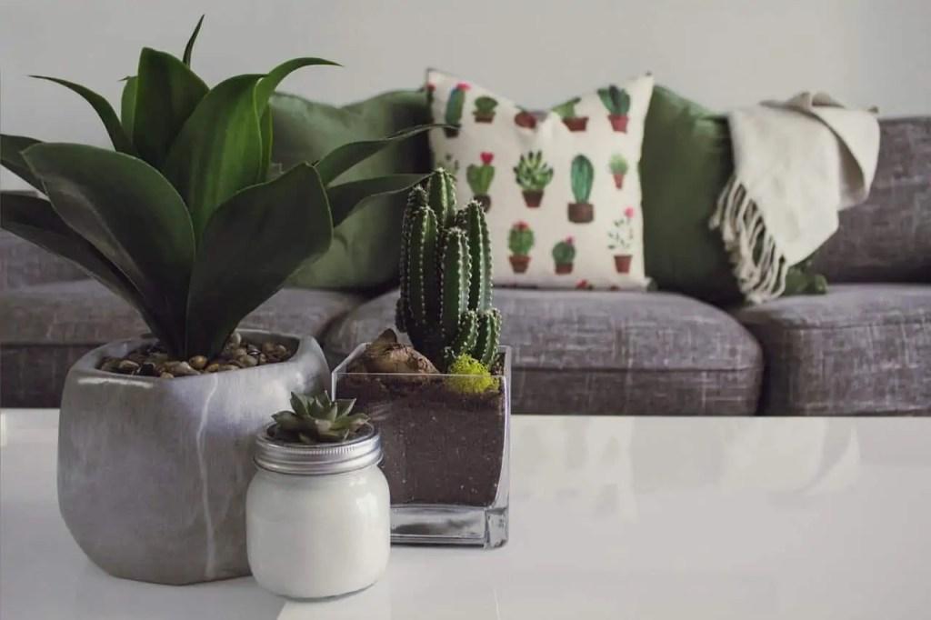 chair plant