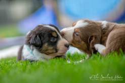 Nora&Oliver_Puppies-190Reglisse
