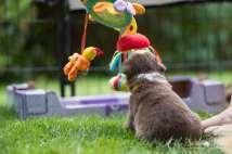 Nora&Oliver_Puppies-198RollingSammy