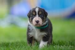 Nora&Oliver_Puppies-204Reglisse