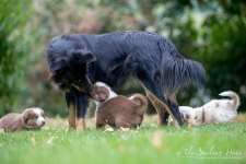 Nora&Oliver_Puppies-246Raiko