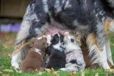 Nora&Oliver_Puppies-252