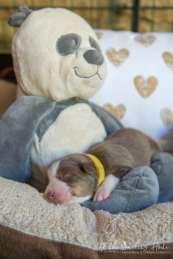 Nora&Oliver_Puppies-44RollingSammy