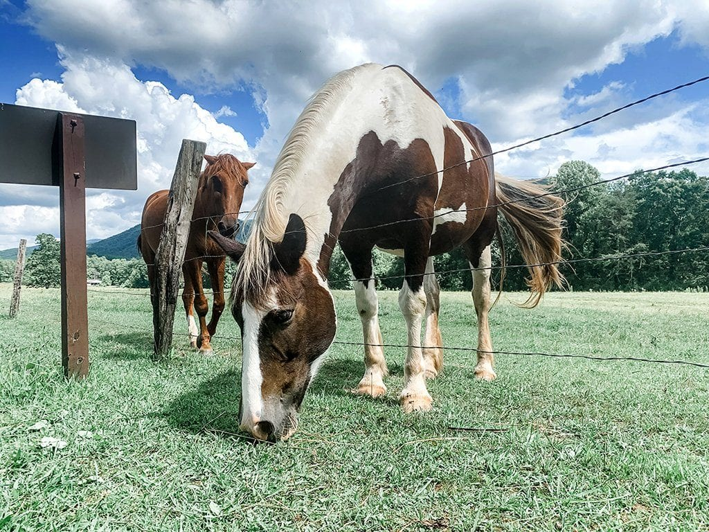 On vehicle-free Wednesdays, you can stop and pet the horses (photo by Morgan Overholt/TheSmokies.com)