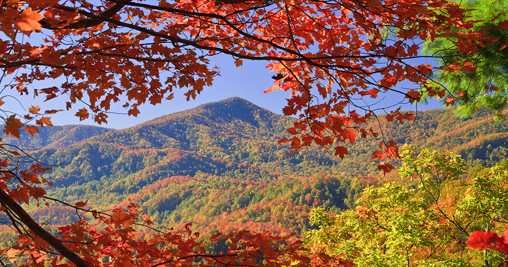 Fall Foliage in the Smoky Mountains