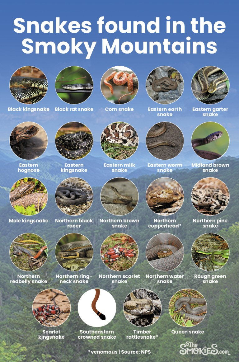 Snakes found in the Smoky Mountains
