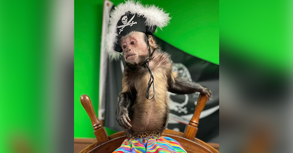 A monkey dressed as a pirate at the Three Monkeys Photo Emporium in Pigeon Forge