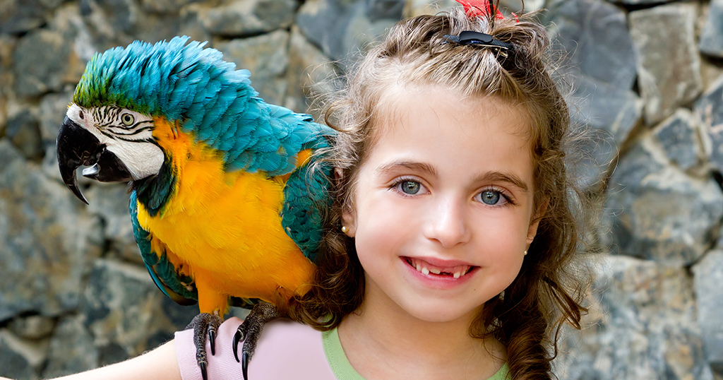Parrot perched on little girl