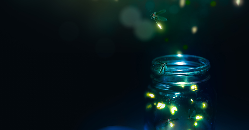 Fireflies vs lightning bugs, is there a difference?