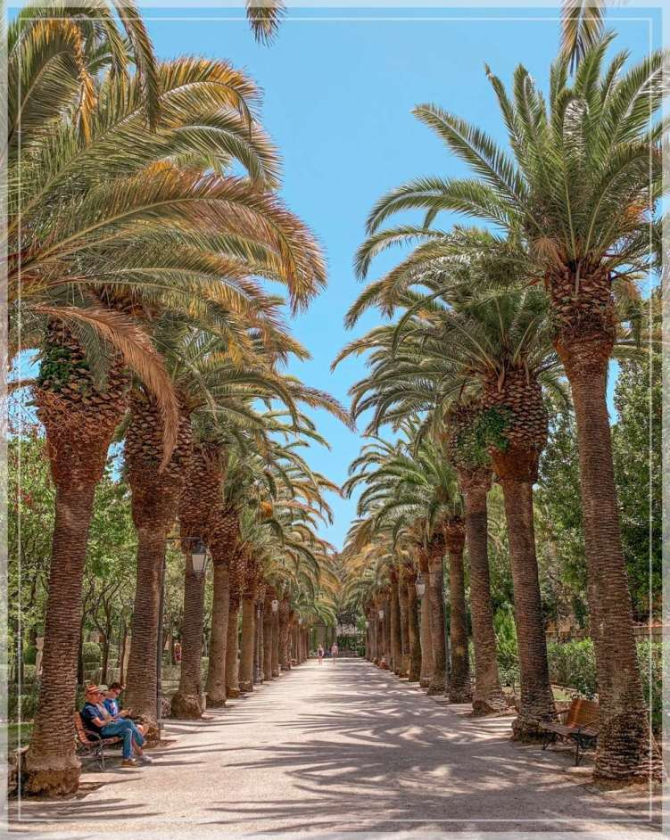 Rows of palm trees in Giardino Ibleo, a public park in Ragusa, Sicily