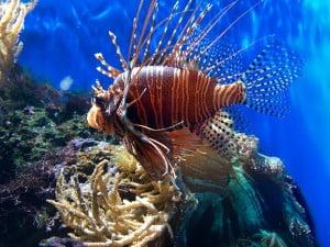 London Zoo Tropical Aqua Exhibit