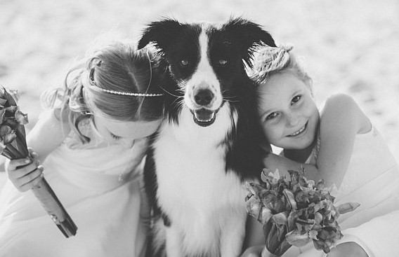 wedding_kids_pets