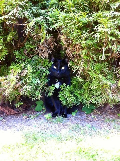 cowards cat teto
