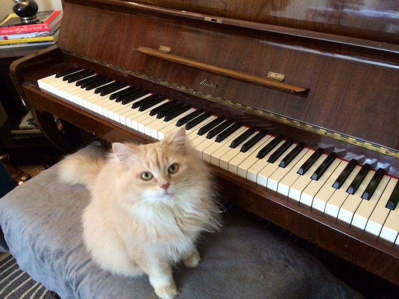 piano_kitty_01