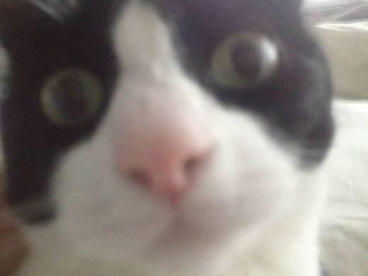 Selfie Larry