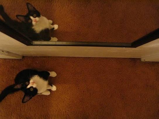 larry kitten
