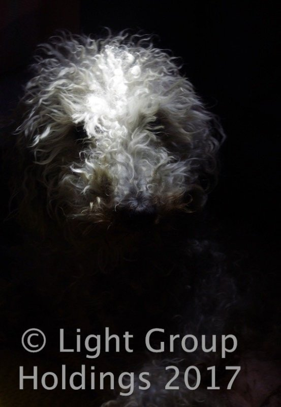 Bella The Dog Photography Super Star