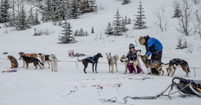 The Solivagant Soul - Dog Sledding around the Three Sisters in Canada