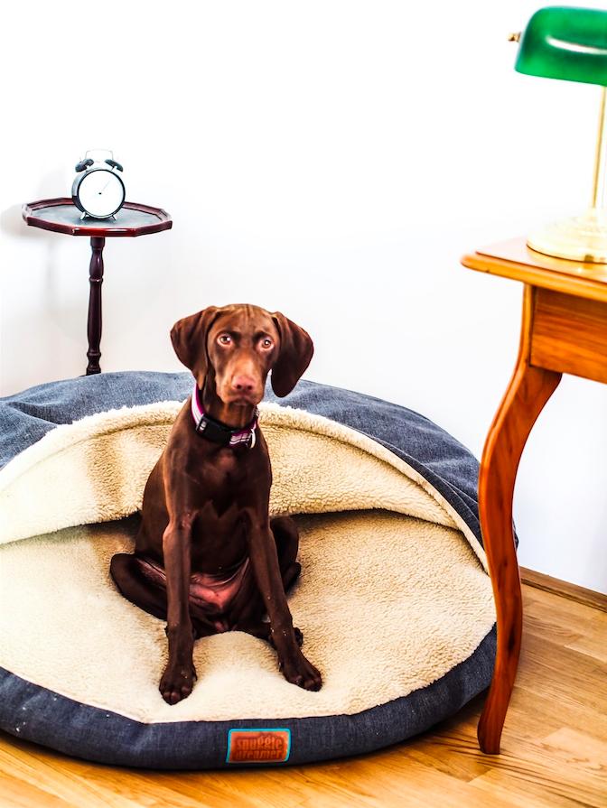 Snuggle Dreamer: Das innovative Hundebett