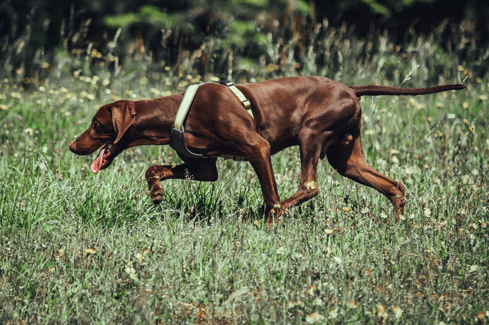 Bjarki Ballspielen mit dem Hund sinnvoll gestalten Sophisticated Sisters Lifestyle Blog Vienna Austria (1 von 1)