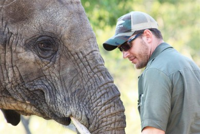 Tom Hardy elephant (Medium)