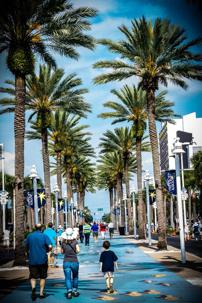 Palm trees align the street in St. Petersburg, Florida.