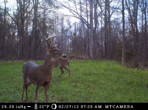 Food plots are an essential part of wildlife management.