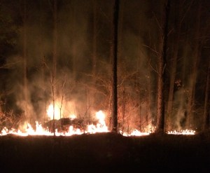 Prescribed Burning is a great way to protect your investment. It also creates excellent habitat for turkeys.