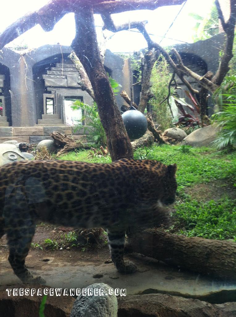 malang-012-batu-secret-zoo-restaurant-cheetah