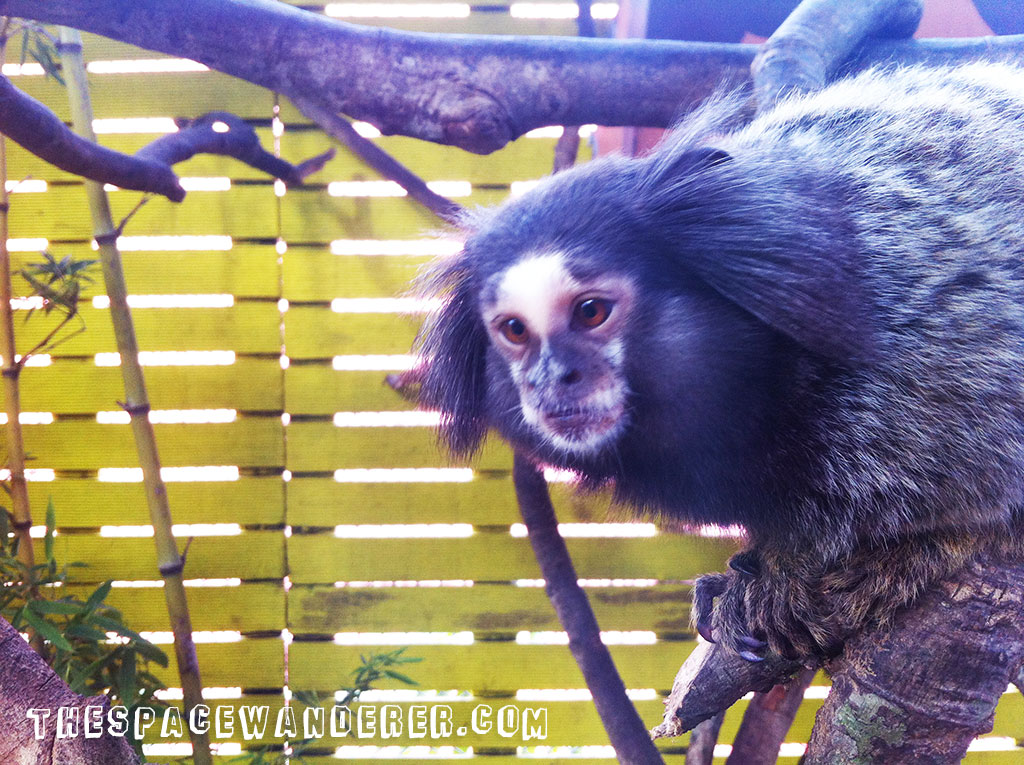 malang-013-batu-secret-zoo-