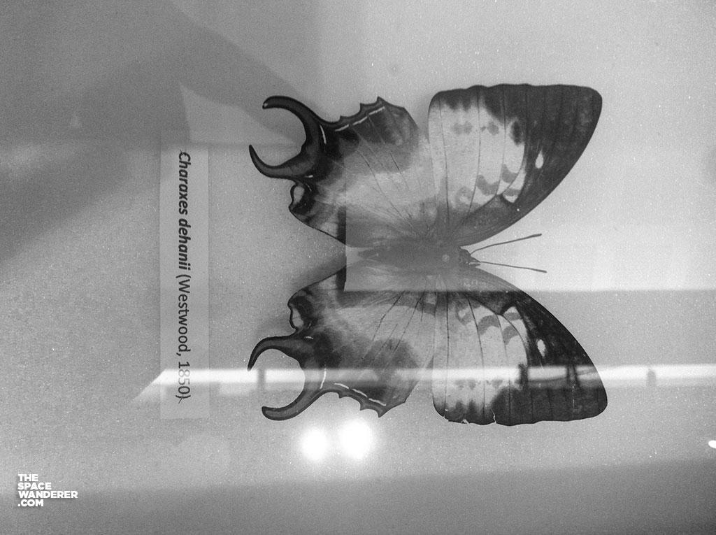 spesimen-sejarah-alam-20150908_034