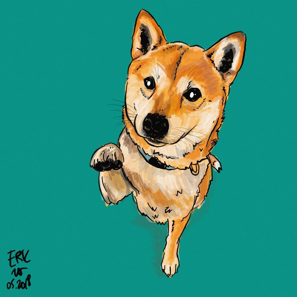 Shiba Inu Dog drawing