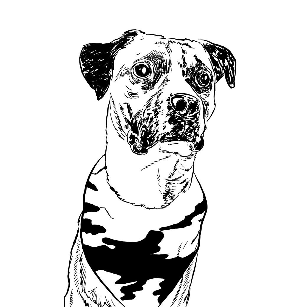 Free dog drawing