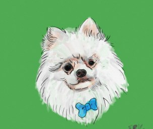 Pomeranian drawing